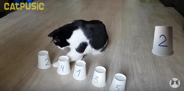 紙コップに手を伸ばす猫