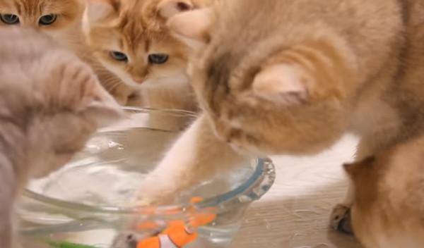 水浸しになる猫