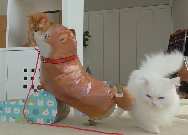 どや顔の猫
