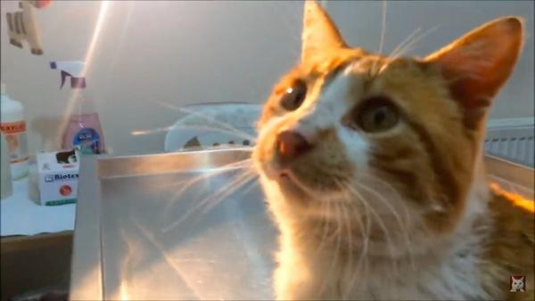 安堵の表情の猫