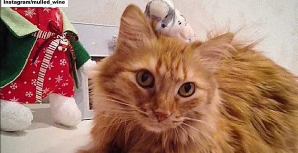 インコを頭の上に乗せる猫