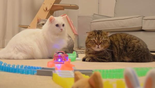 ミニカーを見る猫