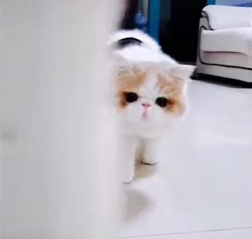 近づいてくるふわふわの猫
