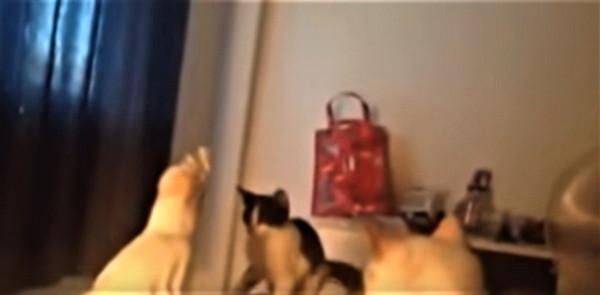 オウムに引く猫