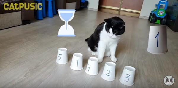 考えている猫