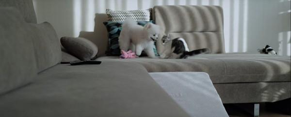 おもちゃの取り合いをする犬と猫