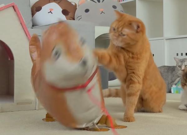 風船に猫パンチする猫