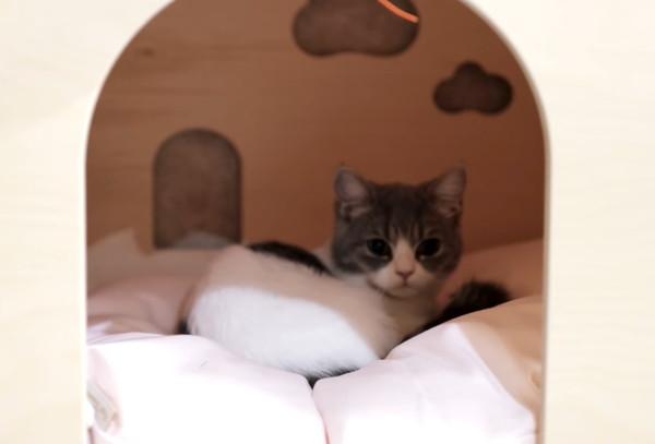 犬小屋を乗っ取った猫