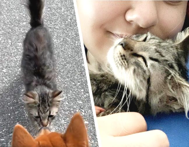 猫と女性が出会った瞬間