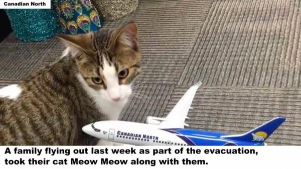 航空会社のオフィスの猫ミュウミュウ