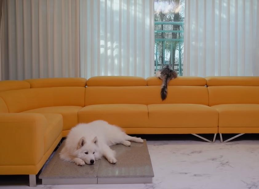 一緒に横になる犬と猫