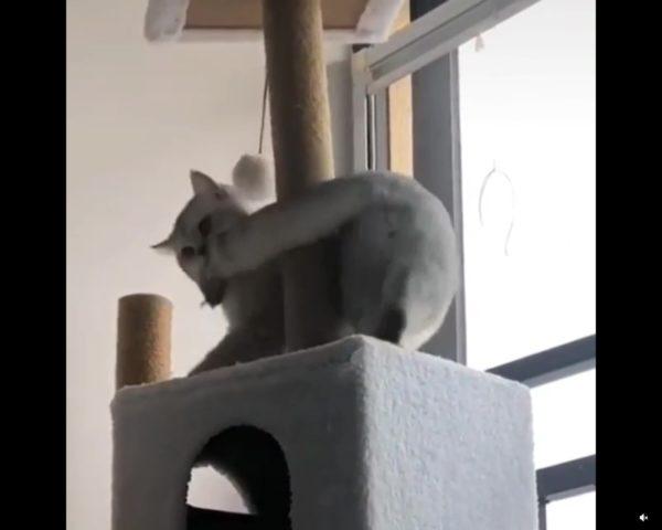 尻尾を咥える猫
