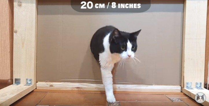 20cmの穴を通る猫