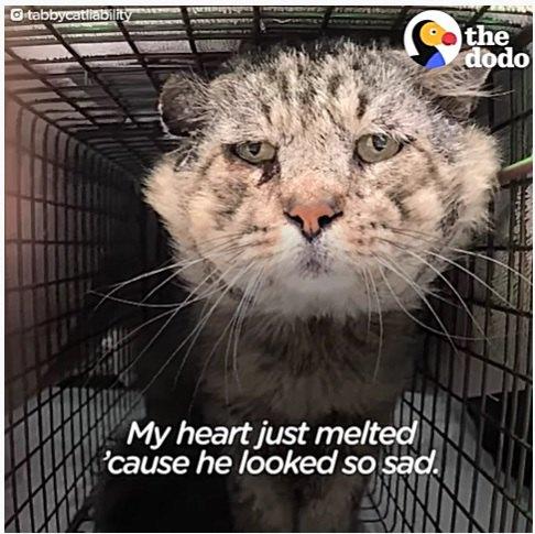 捕獲器に入った老猫の悲しい姿
