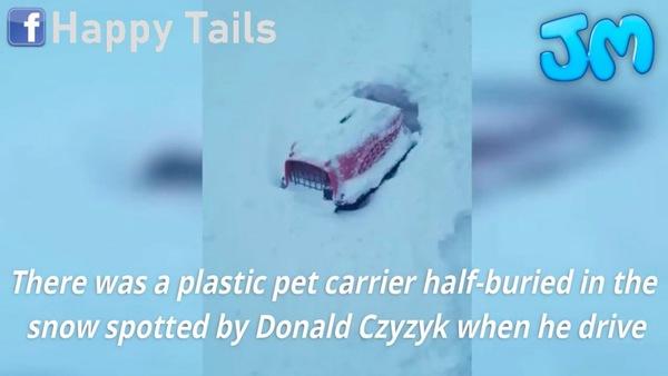 雪に埋もれたキャリー