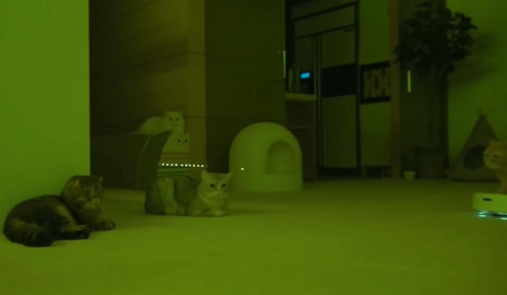 猫UFOのフレームイン