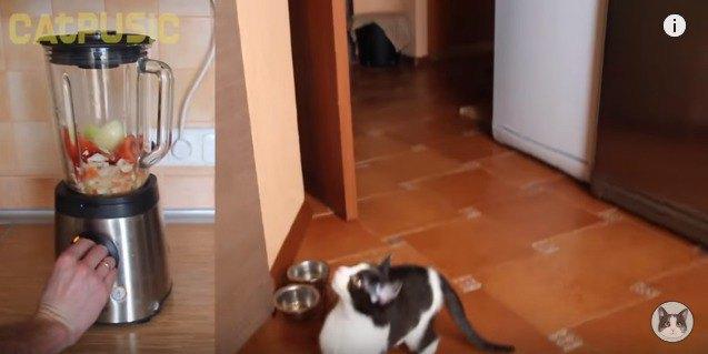 台の上が気になる猫