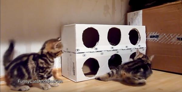 子猫のお手製ハウス