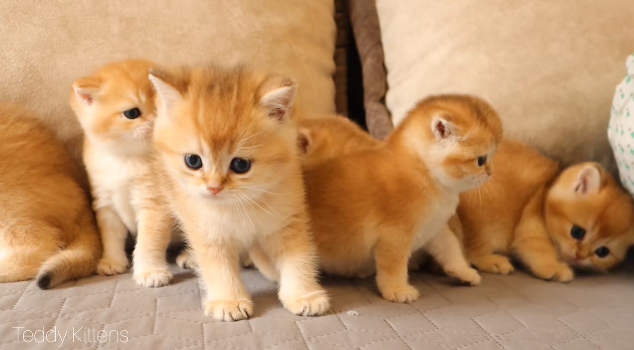 いっぱいの子猫