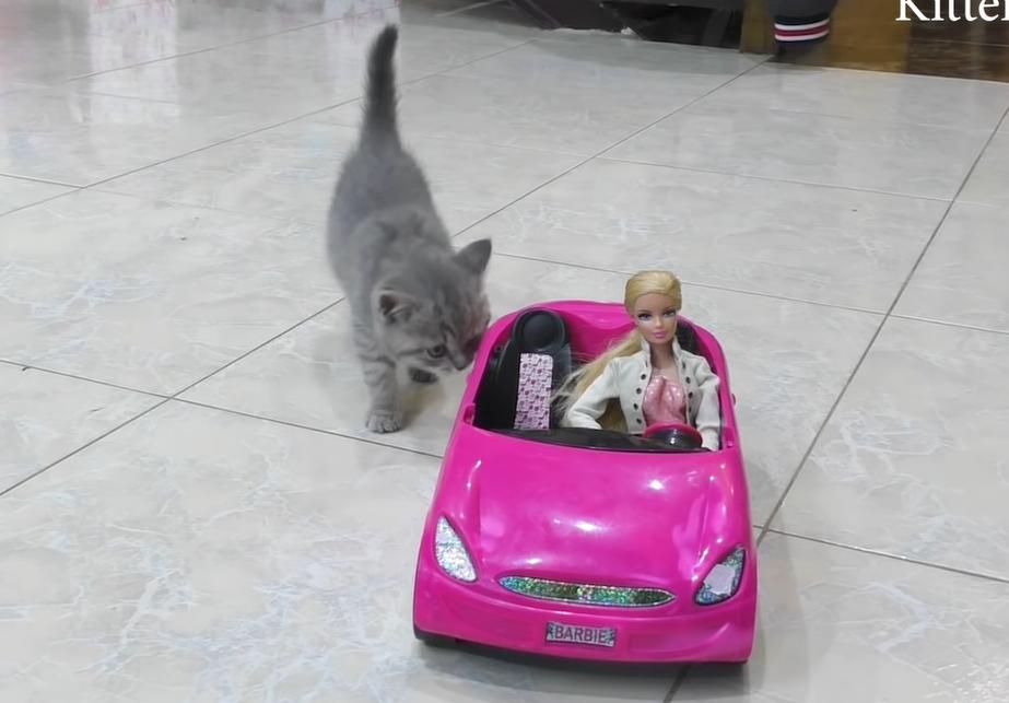 ピンクの車を発見した子猫