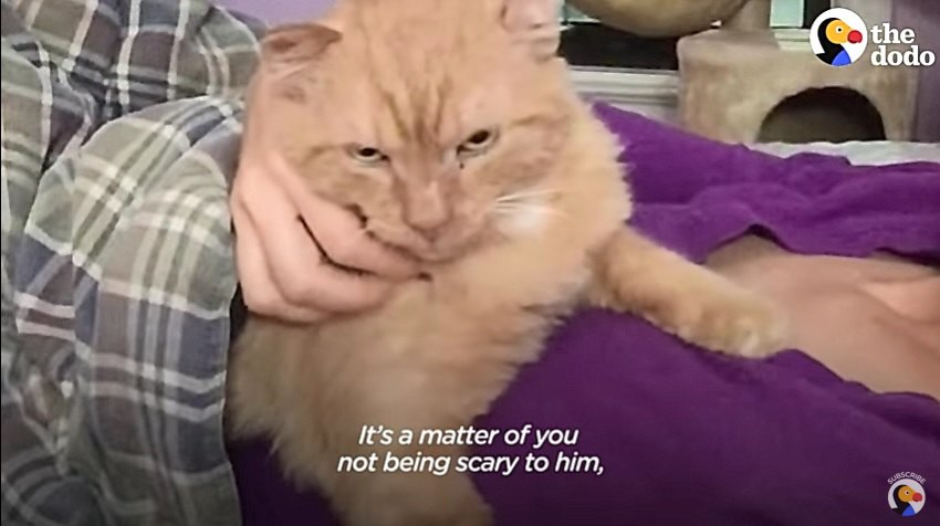 ガードする猫