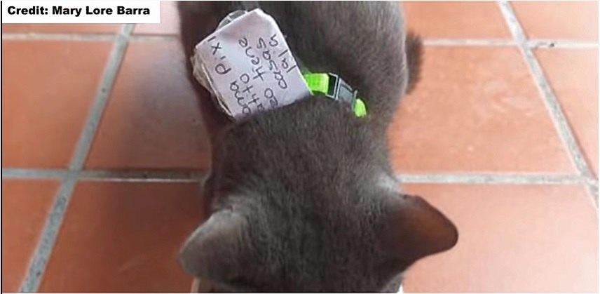 猫の首輪にメモを挟む