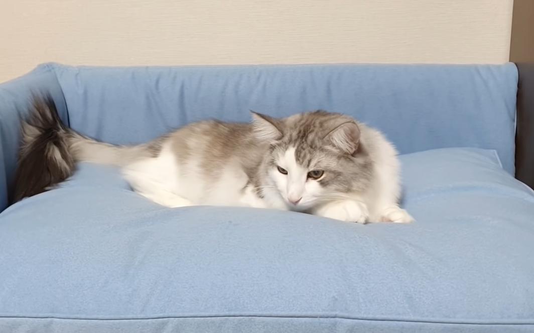 新しいベッドで眠る猫