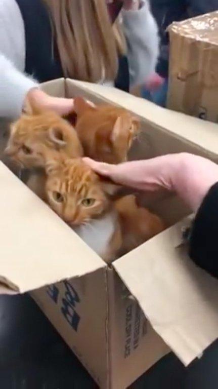 ダンボールに入っていた猫3匹