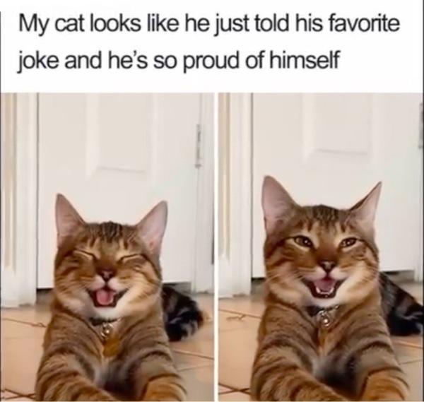 笑う猫としてバズった写真