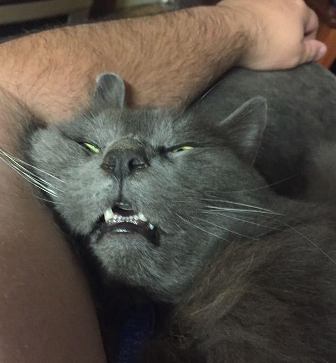 下の歯が見える猫