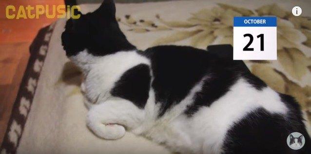 ベッドから顔をあげる猫