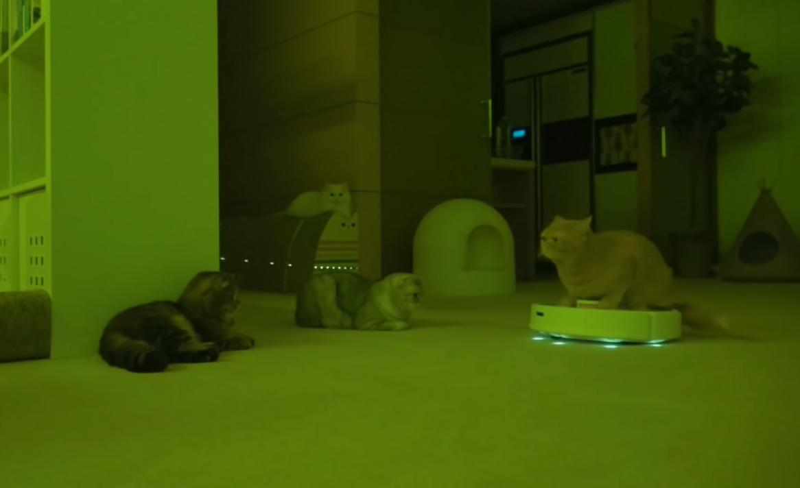 ルンバに乗った猫が登場