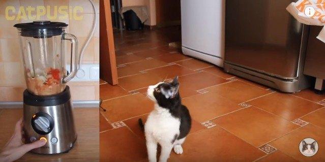 何とか見ようとする猫