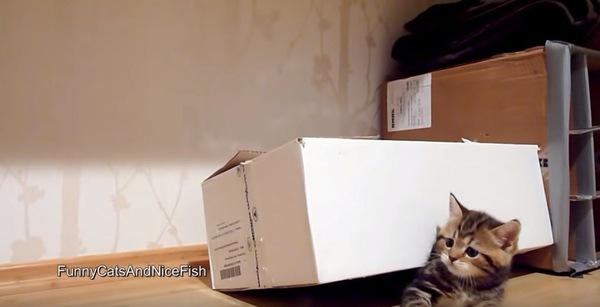 下敷きになる子猫