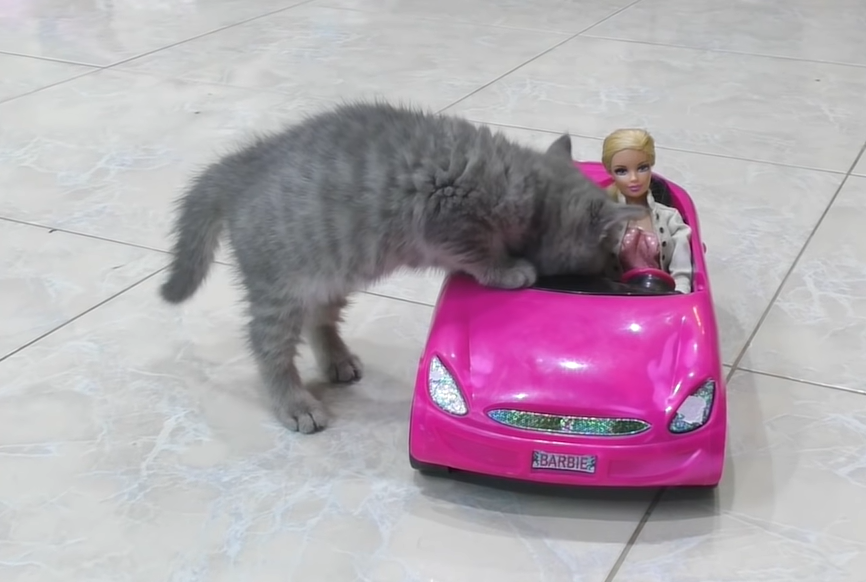 車に乗りこもうとした子猫