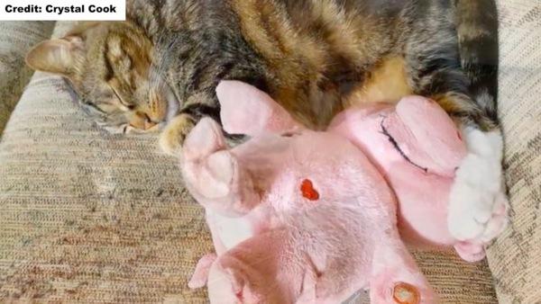 豚とお昼寝