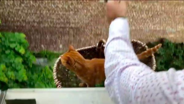 エレベーターで窓から地上に降りる猫