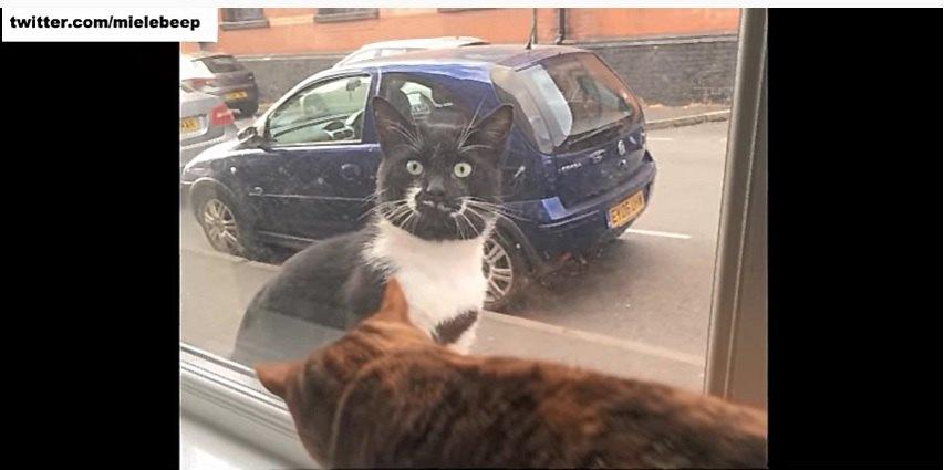窓際で寛ぐ猫