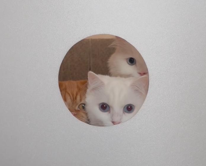 穴から覗く3匹の猫