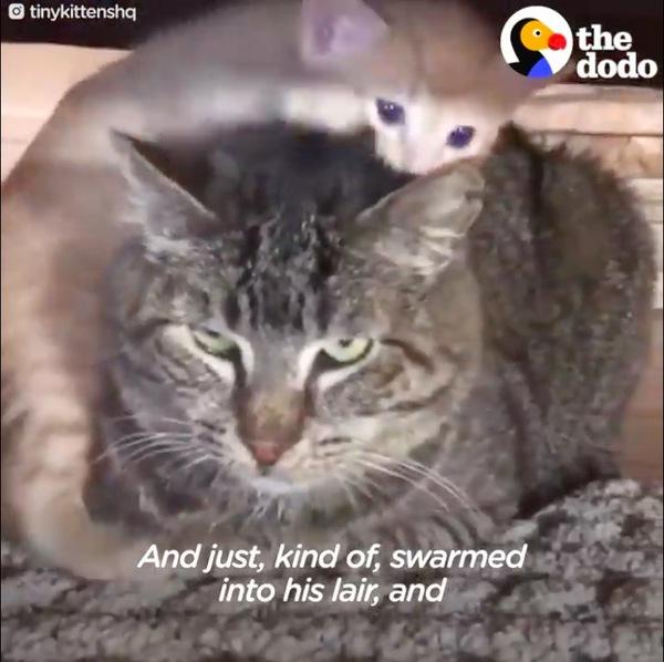 子猫と対面