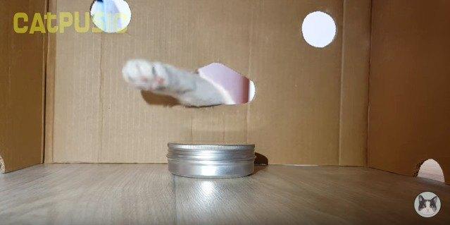 段ボールに手を入れる猫