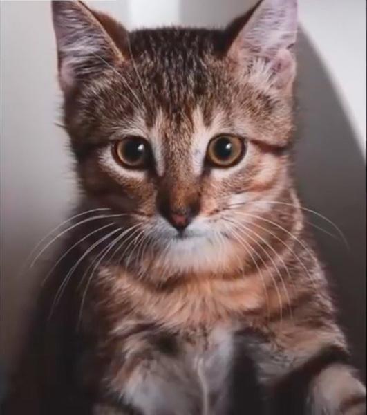子猫時代のチェストナット