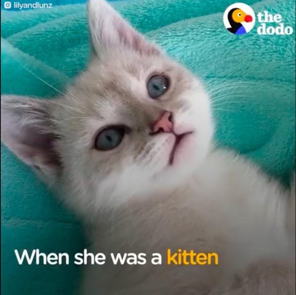 子猫時代のリリー