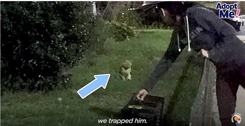 捕獲される猫のタフ