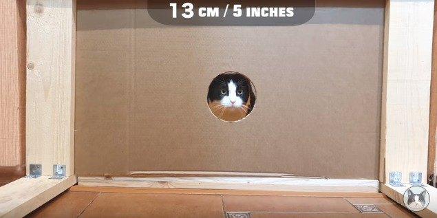 13cmの穴を通る猫