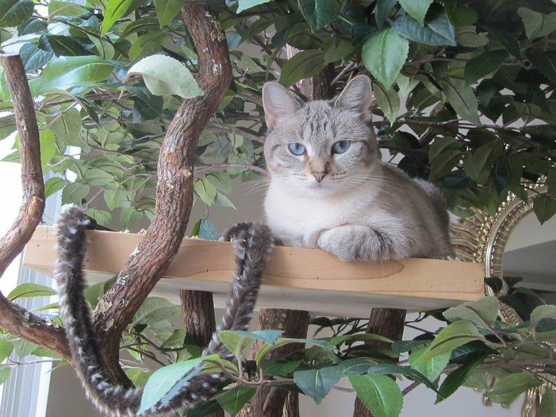 猫の木でくつろぐ猫