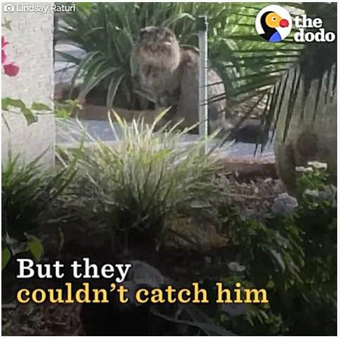 野良の老猫を捕獲