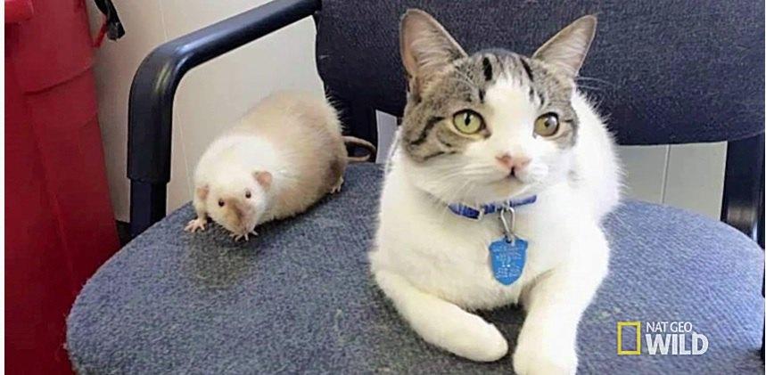 ネズミを癒やす猫のパンプキン