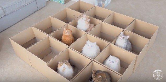 段ボールに収まる7匹の猫