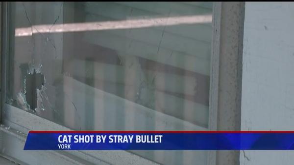被弾した窓
